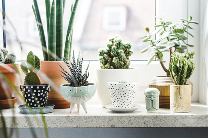 5 Ways to Incorporate Plants into Your Home Decor